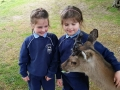 Junior Infants School Tour May 2017 Kennedys (14)-min