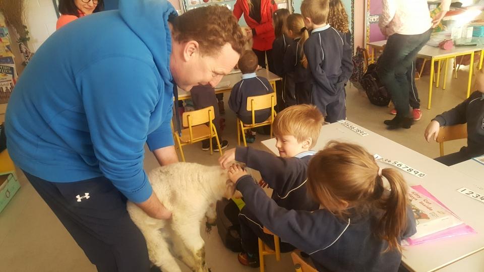 Lambs 2017 (13)