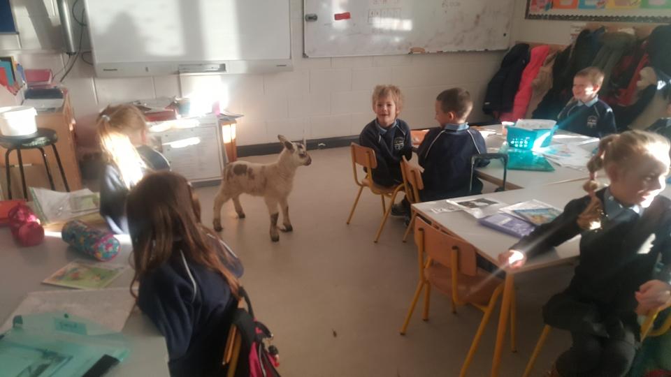 Lambs 2017 (16)