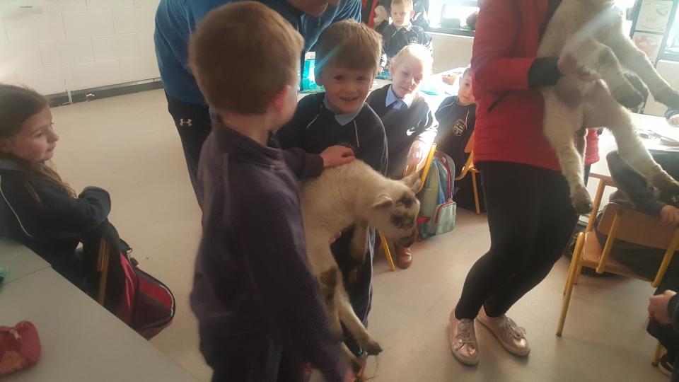 Lambs 2017 (20)