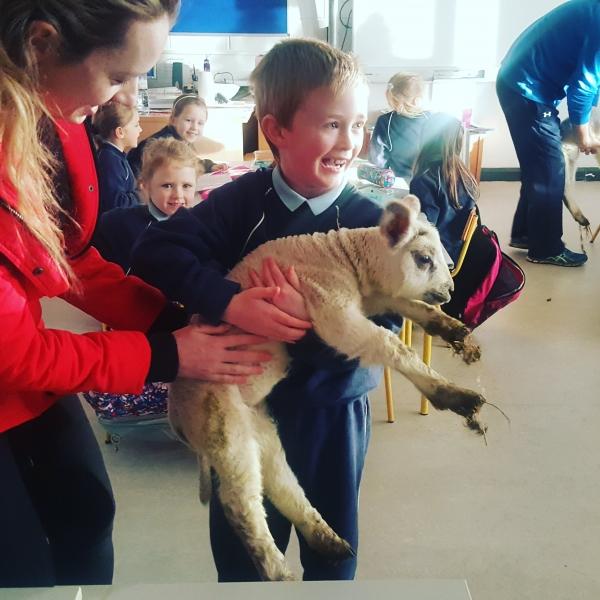 Lambs 2017 (6)