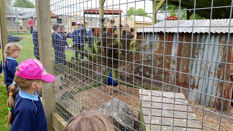 Junior Infants School Tour May 2017 Kennedys (1)-min