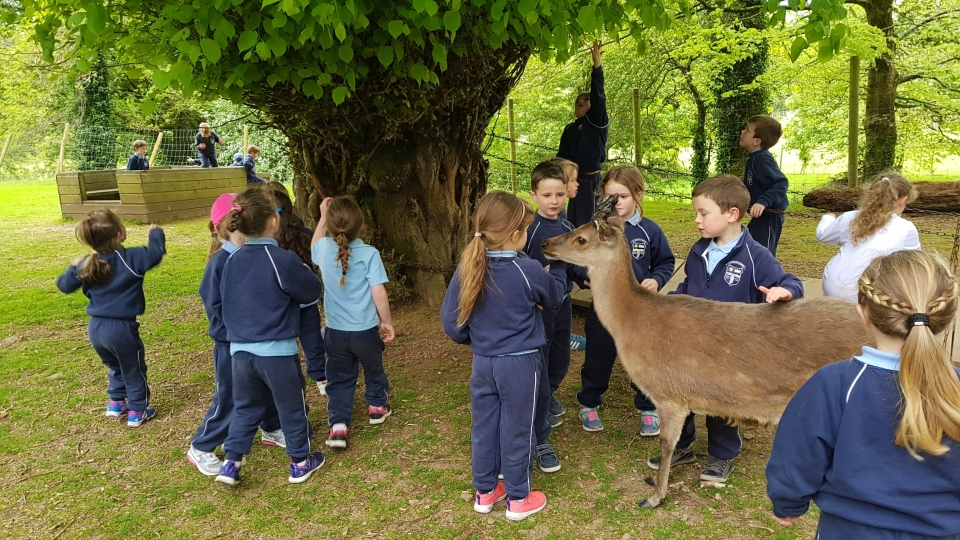 Junior Infants School Tour May 2017 Kennedys (15)-min