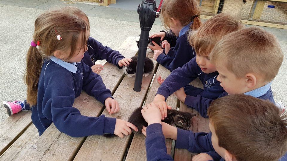 Junior Infants School Tour May 2017 Kennedys (21)-min
