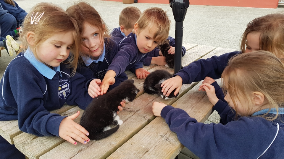 Junior Infants School Tour May 2017 Kennedys (22)-min