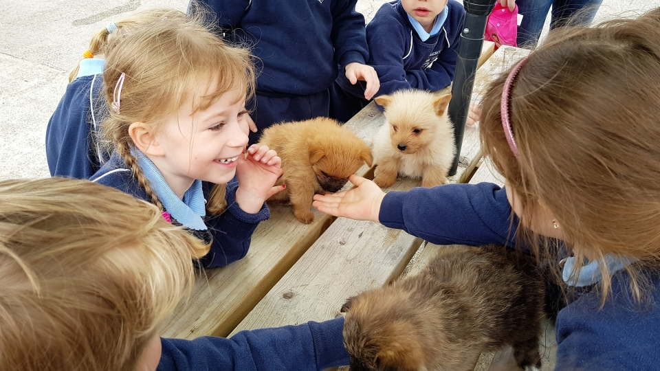 Junior Infants School Tour May 2017 Kennedys (26)-min