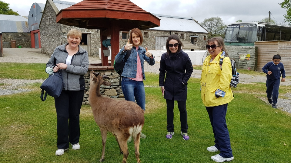 Junior Infants School Tour May 2017 Kennedys (35)-min
