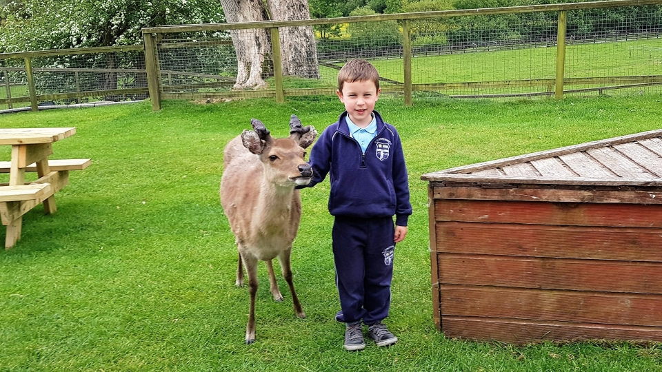 Junior Infants School Tour May 2017 Kennedys (5)-min
