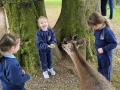 Junior Infants School Tour May 2017 Kennedys (11)-min