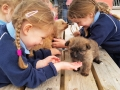 Junior Infants School Tour May 2017 Kennedys (23)-min