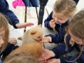 Junior Infants School Tour May 2017 Kennedys (24)-min
