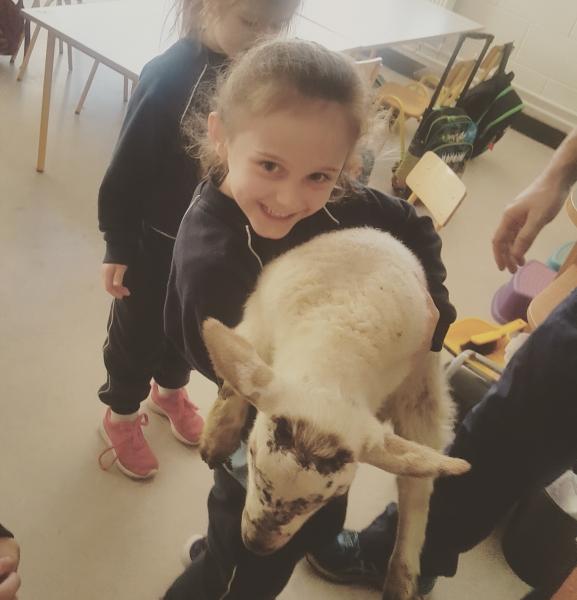Lambs 2017 (7)