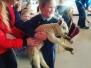 Lambs visit St. Johns Jan 2017