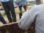 Planting 6th Class April 2017